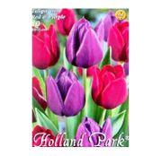 Bulbi de flori Lalea Duo Red & Purple 10buc