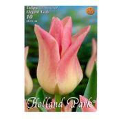 Bulbi de flori Lalea Elegant Lady 10buc
