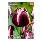 Bulbi de flori Lalea Fontainebleau 10buc