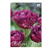 Bulbi de flori Lalea Fringed Mascotte 6buc