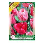 Bulbi de flori Lalea Hemisphere 10buc