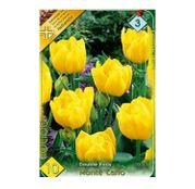 Bulbi de flori Lalea Monte Carlo 10buc
