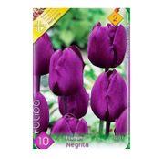 Bulbi de flori Lalea Negrita 10buc