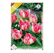Bulbi de flori Lalea Peach Blossom 10buc