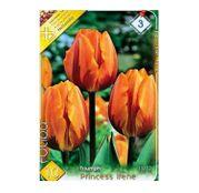 Bulbi de flori Lalea Princess Irene 10buc