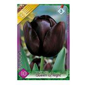 Bulbi de flori Lalea Queen of Night 10buc
