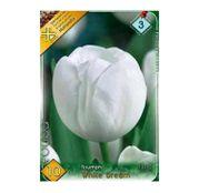 Bulbi de flori Lalea White Dream 10buc