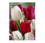 Bulbi de flori Lalele Duo Red & White 10 buc