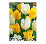 Bulbi de flori Lalele Duo Yellow & White 10 buc