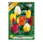 Bulbi de flori Lalele Fosteriana Mixed 10 buc