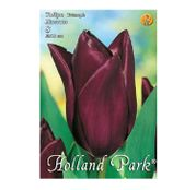 Bulbi de flori Lalele Havran 8buc