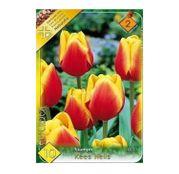 Bulbi de flori Lalele Kees Nelis 10 buc