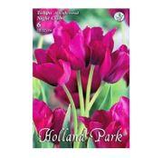 Bulbi de flori Lalele Night Club 6 buc