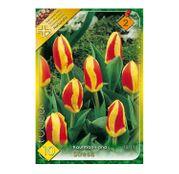Bulbi de flori Lalele Stresa 10 buc