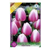 Bulbi de flori Lalele Valentine/Synaeda Blue 10 buc