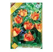 Bulbi de flori Lalele Willem van Oranje 10 buc