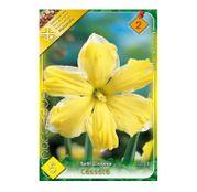 Bulbi de flori Narcisa Cassata 5buc