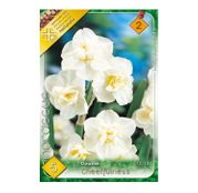 Bulbi de flori Narcisa Cheerfulness 5buc