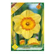 Bulbi de flori Narcisa Delibes 5buc