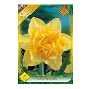 Bulbi de flori Narcisa Dick Wilden 5buc