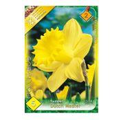 Bulbi de flori Narcisa Dutch Master 5buc