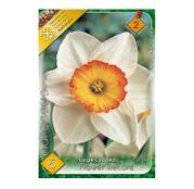 Bulbi de flori Narcisa Flower Record 5buc