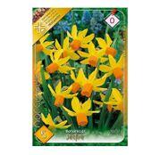Bulbi de flori Narcisa Jetfire 5buc