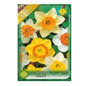 Bulbi de flori Narcisa Large flowered Mixed 8 buc