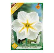 Bulbi de flori Narcisa Lemon Beauty 5buc