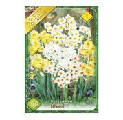 Bulbi de flori Narcisa Multiflower mixed 10buc