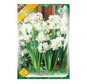 Bulbi de flori Narcisa Paperwhite 5buc