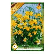 Bulbi de flori Narcisa Tete a Tete 8buc