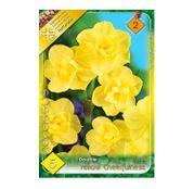 Bulbi de flori Narcisa Yellow Cheerfulness 5buc