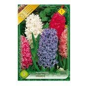 Bulbi de flori Zambile Mixed (3buc, 10buc)