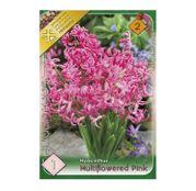 Bulbi de flori Zambile multiflori Pink/Roz 1buc