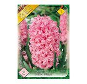 Bulbi de flori Zambile Pink Pearl 3 buc