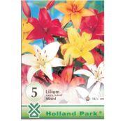 Bulbi de flori Crini lilium asiatic mix (5buc,10buc)