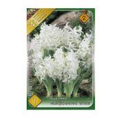 Bulbi de flori Zambile multiflori White/Alb 1buc
