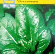 Seminte Spanac Matador (10g, 30g)