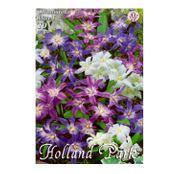 Bulbi de flori Chionodoxa Mixed 10buc