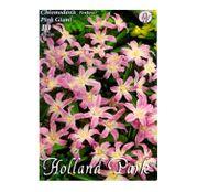 Bulbi de flori Chionodoxa Pink Giant 10buc