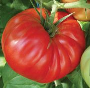 Seminte tomate Country Taste F1 250sem.