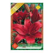 Bulbi de flori Crin Asiatic Hybrid Red 1buc