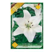 Bulbi de flori Crin Asiatic Hybrid White 1buc