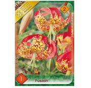 Bulbi de flori Crin Fusion 1buc