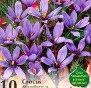 Bulbi de flori Brandusa Crocus Sativus 10buc