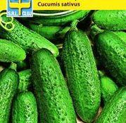 Seminte Castraveti de toamna Delikatess 3g