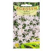 Seminte Floare de colt (Leontopodium alpinum) 0.05g