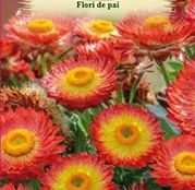 Seminte Flori de Pai portocalii 0.4g