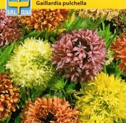 Seminte flori Fluturei (Gaillardia pulchella) 0.5g